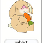 rabbit flashcard
