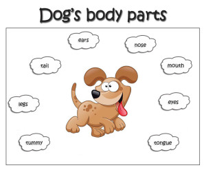 dogs-body-parts