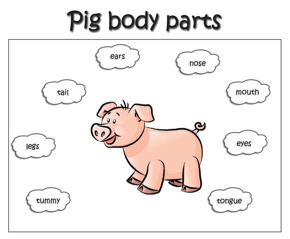 Раскраска животных на английском