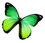 green colored butterfly
