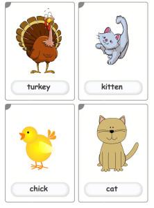 farm-animals4 flashcards