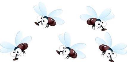 five-fruit-flies