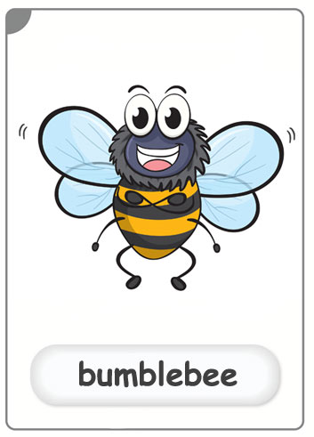 insects-bumblebee-flashcard