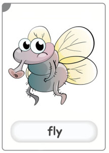 insects-fly-flashcard