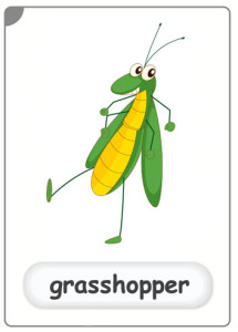 insects-grasshopper-flashcard