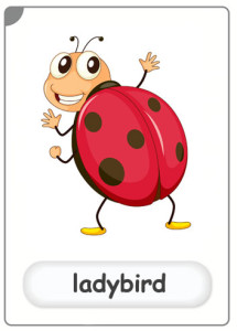 insects-ladybird-flashcard