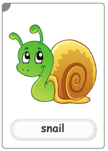 insects-snail-flashcard